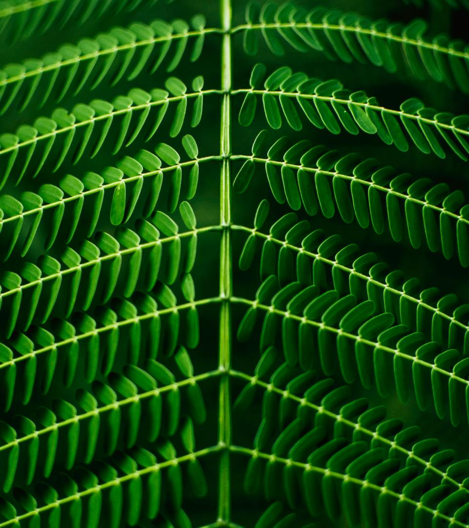 Plant Backgrounds - Image Collection